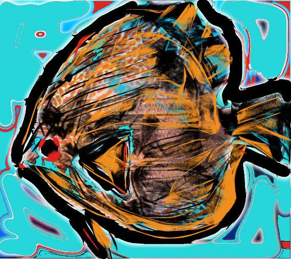 immagini-pesci